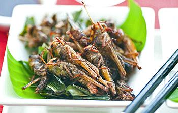 Insekten sind nährstoffreich, enthalten aber viel unverdauliches Chitin, ähnlich wie Pilze, das in grossen Mengen Verdauungsprobleme bereitet. Quelle: www.foodaktuell.ch